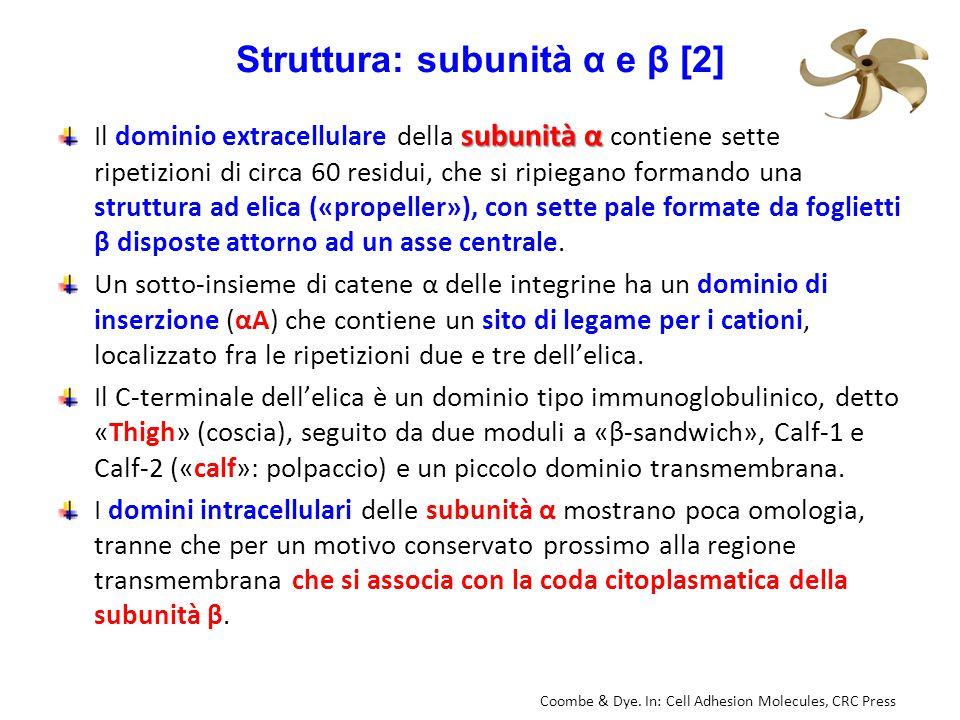 Struttura: subunità α e β [2]
